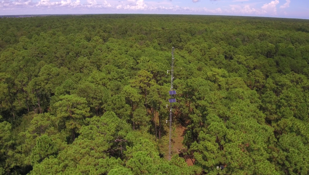 image of research tower in the woods