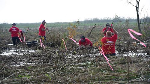 volunteers working in wetlands