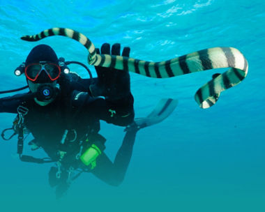 Diver swimming near a water snake