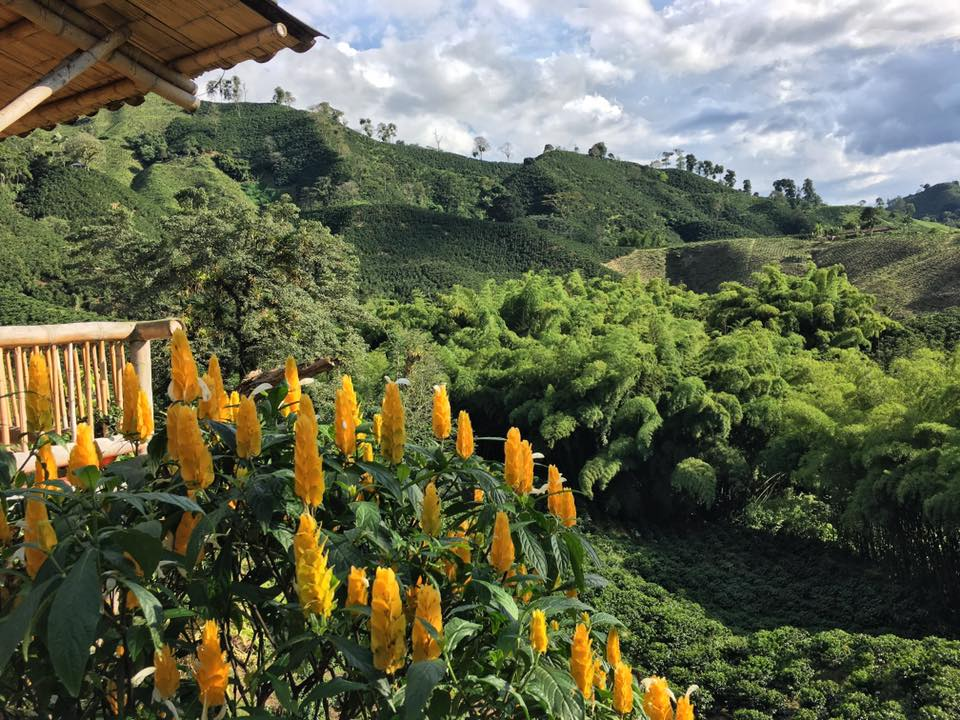 A coffee estate in Chinchina, in Colombia's Zona Cafetera