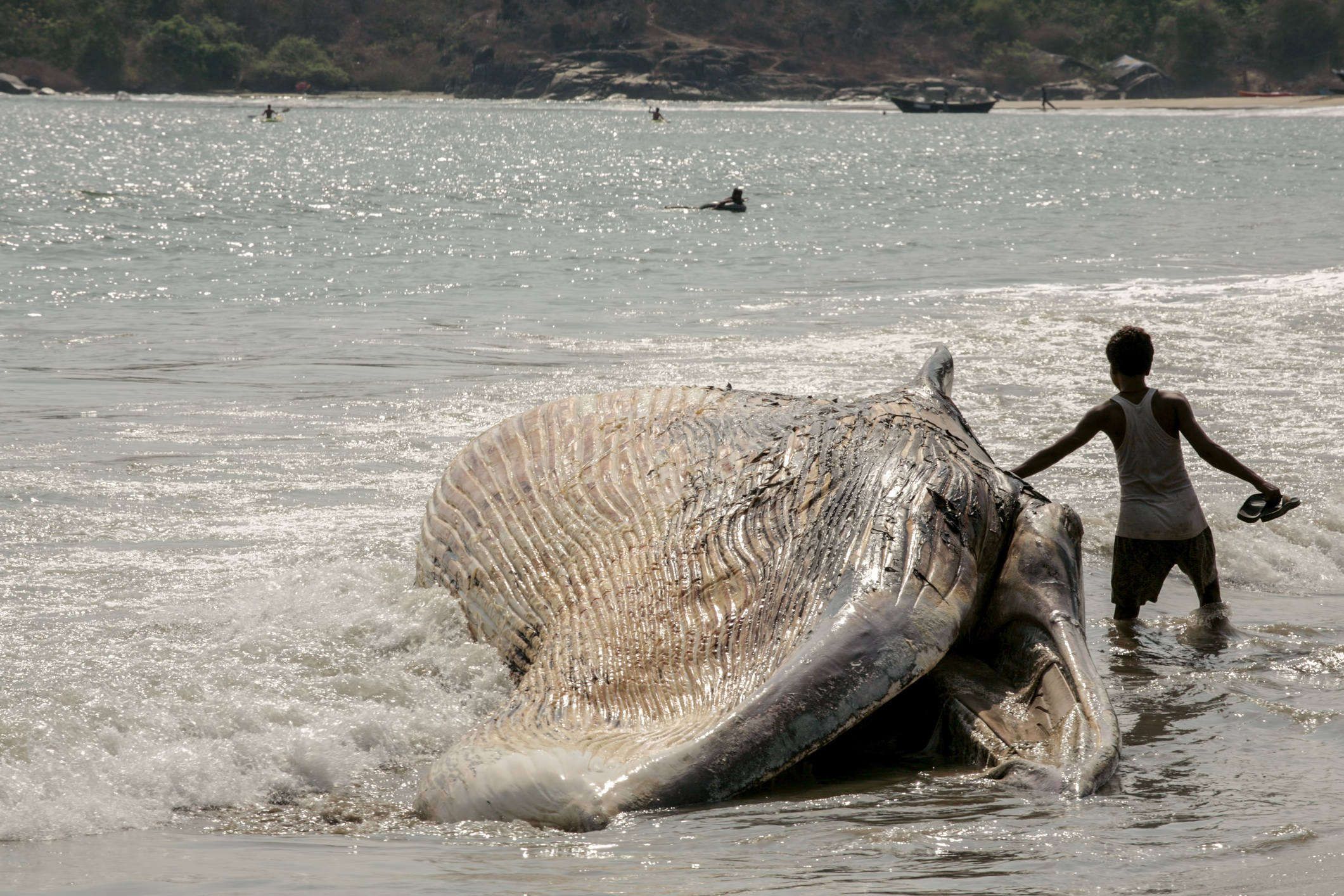 Beached Whale and teen