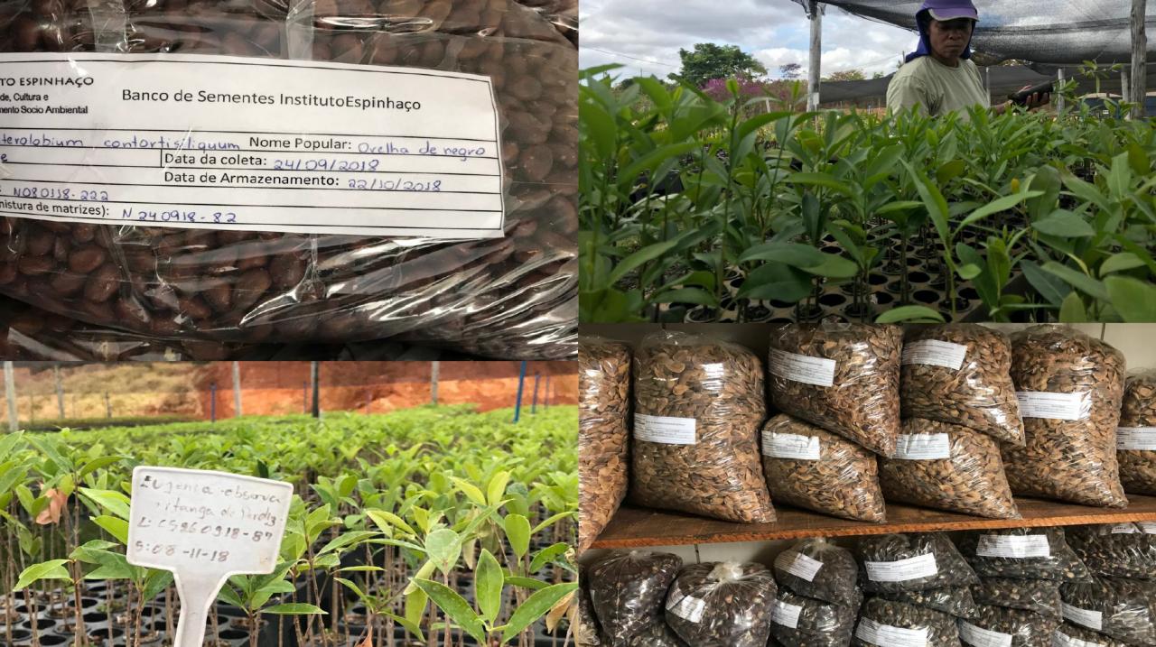 seeds and seedlings