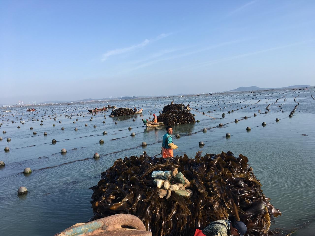 Seaweed farm in China
