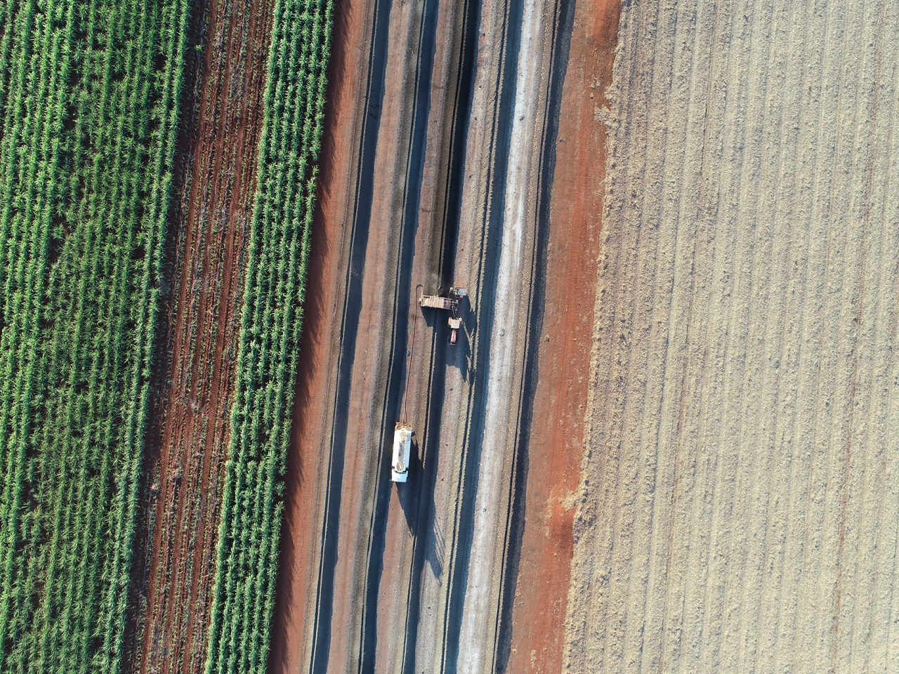 Sugarcane harvest in Brazil