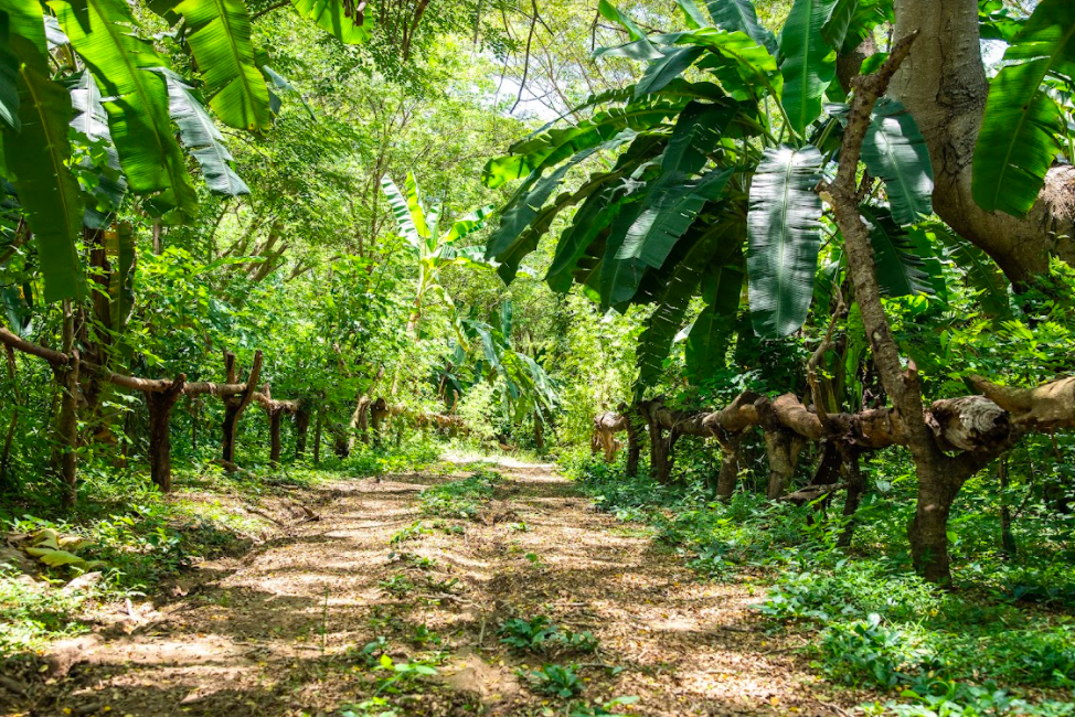 Entering a cacao forest in Madagascar