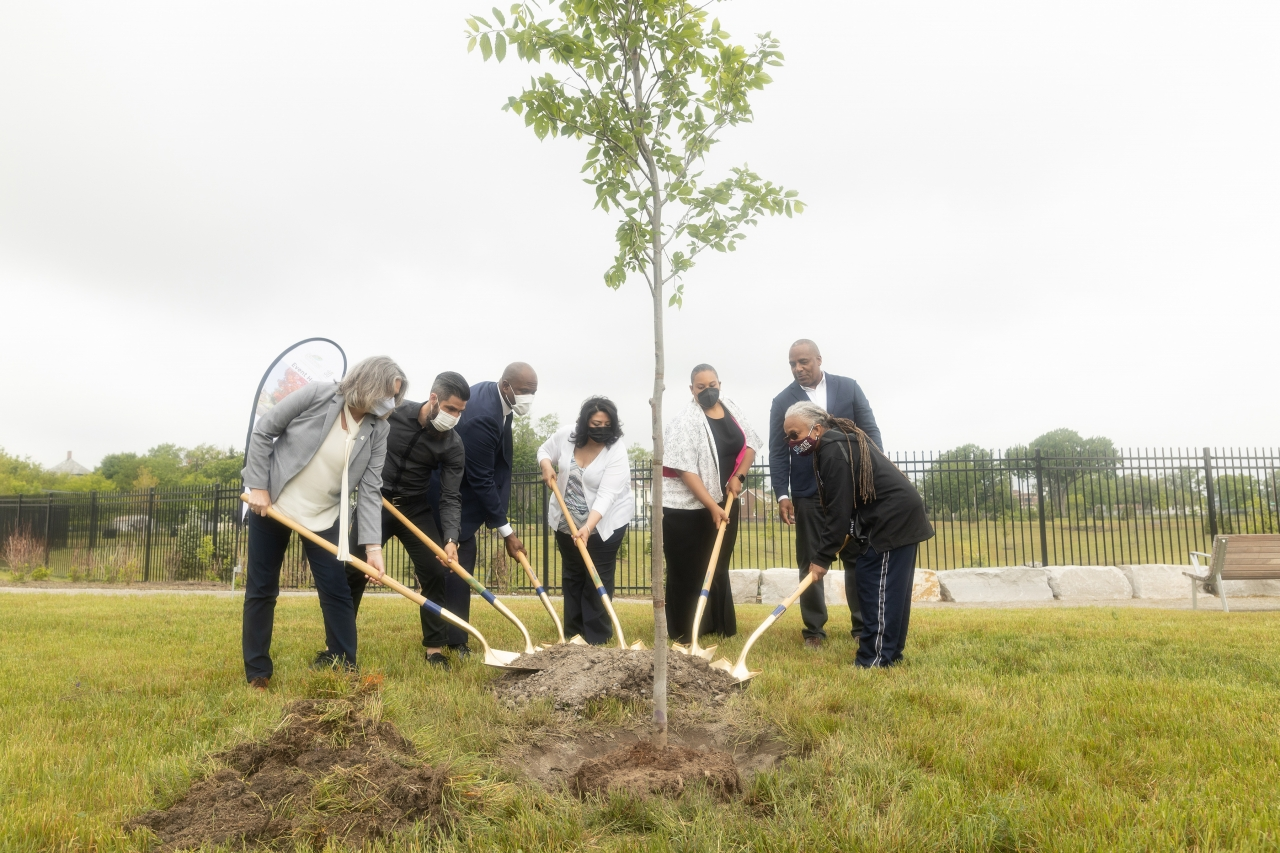 people standing with shovels around a tree