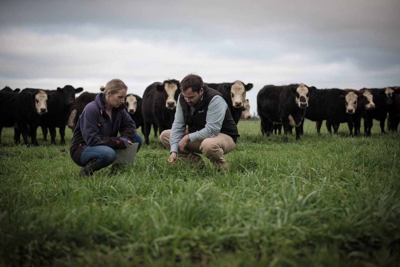 Image of two people talking in a field of cows