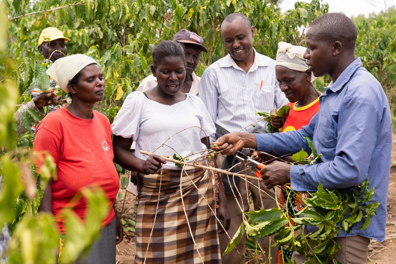 Coffee farmers in Kenya learn different techniques to adapt to climate change through the Fairtrade Climate Academy