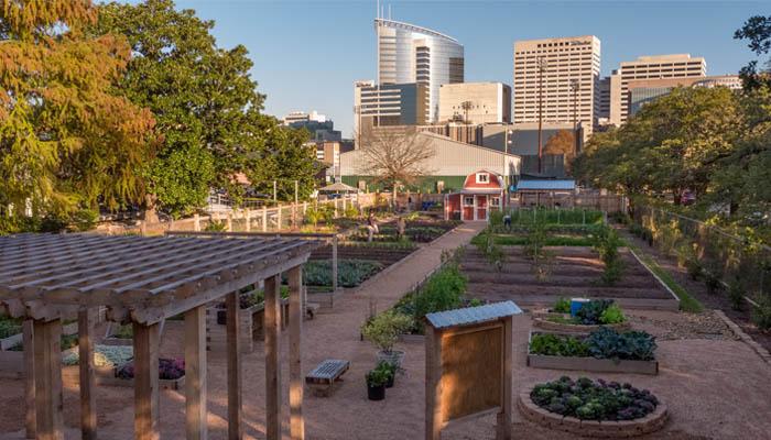 garden at Rice University