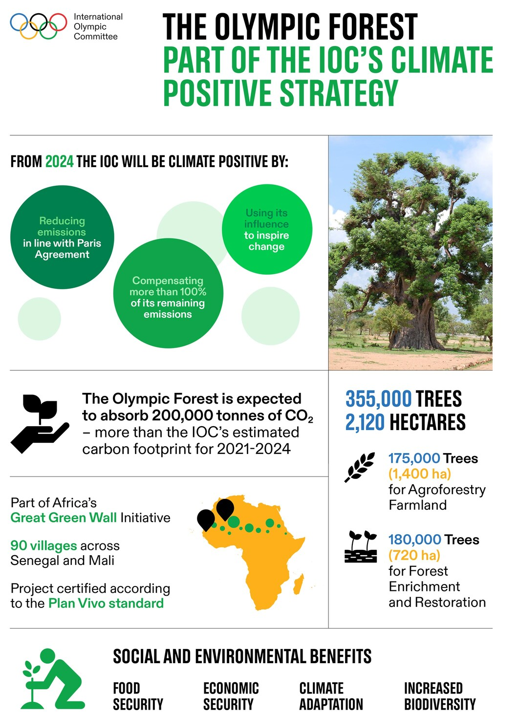 The Olympic Forest Infographic