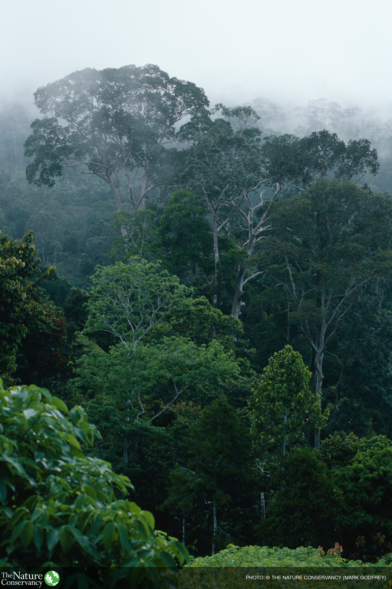 Image of forest canopy