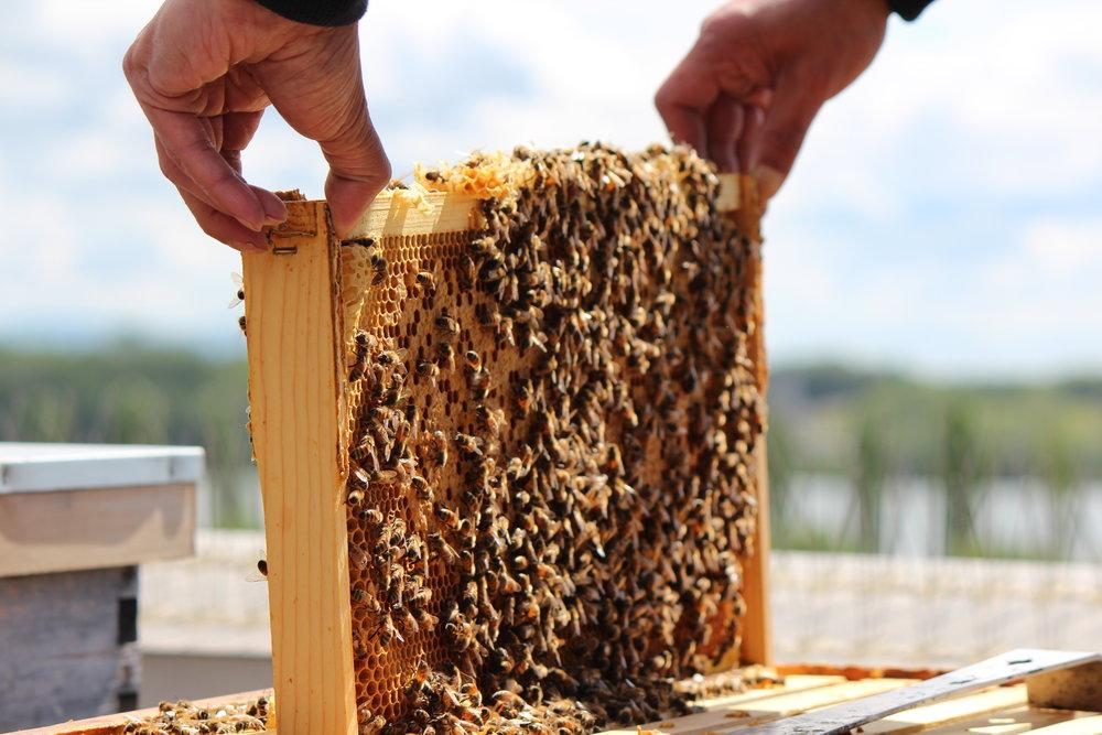 manmade beehive