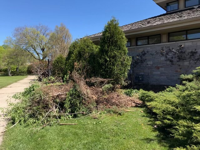 plant debris on grass
