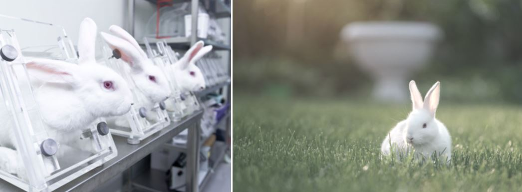 rabbits confined in a lab are shown on the left and one rabbit in the grass on the right