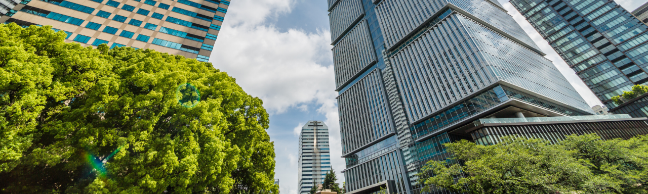 tall buildings and tree tops