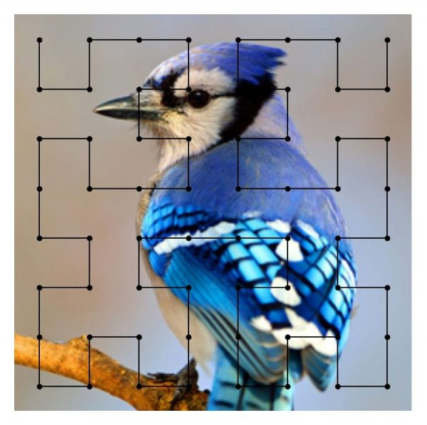 A diagram of a North American Blue Jay with an analytical mapping overlay, to indicate the simulation of mapping color frequencies to sound frequencies. Photo credit: National Audubon Society.
