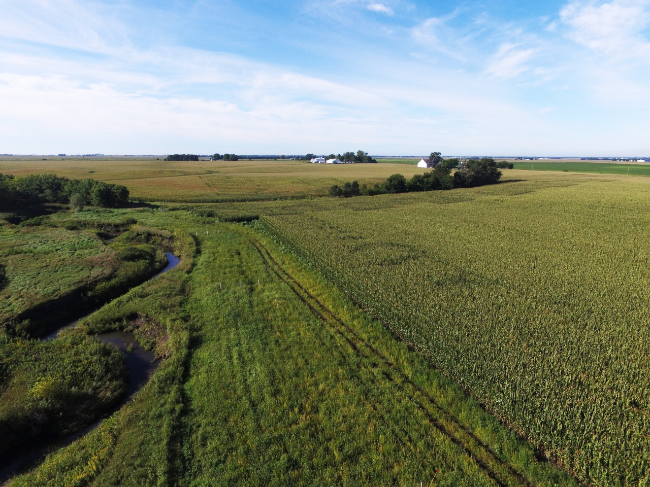 Saturated buffers are a conservation option that removes little to no land from production, require little maintenance, and does not affect crop yields when placed in ideal sites. © NRCS/SWCS photo by Lynn Betts
