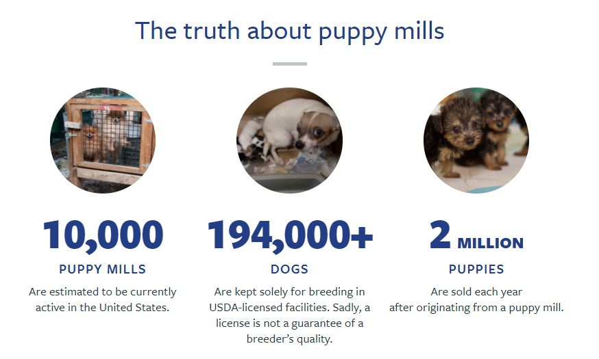 Truth about puppy mills