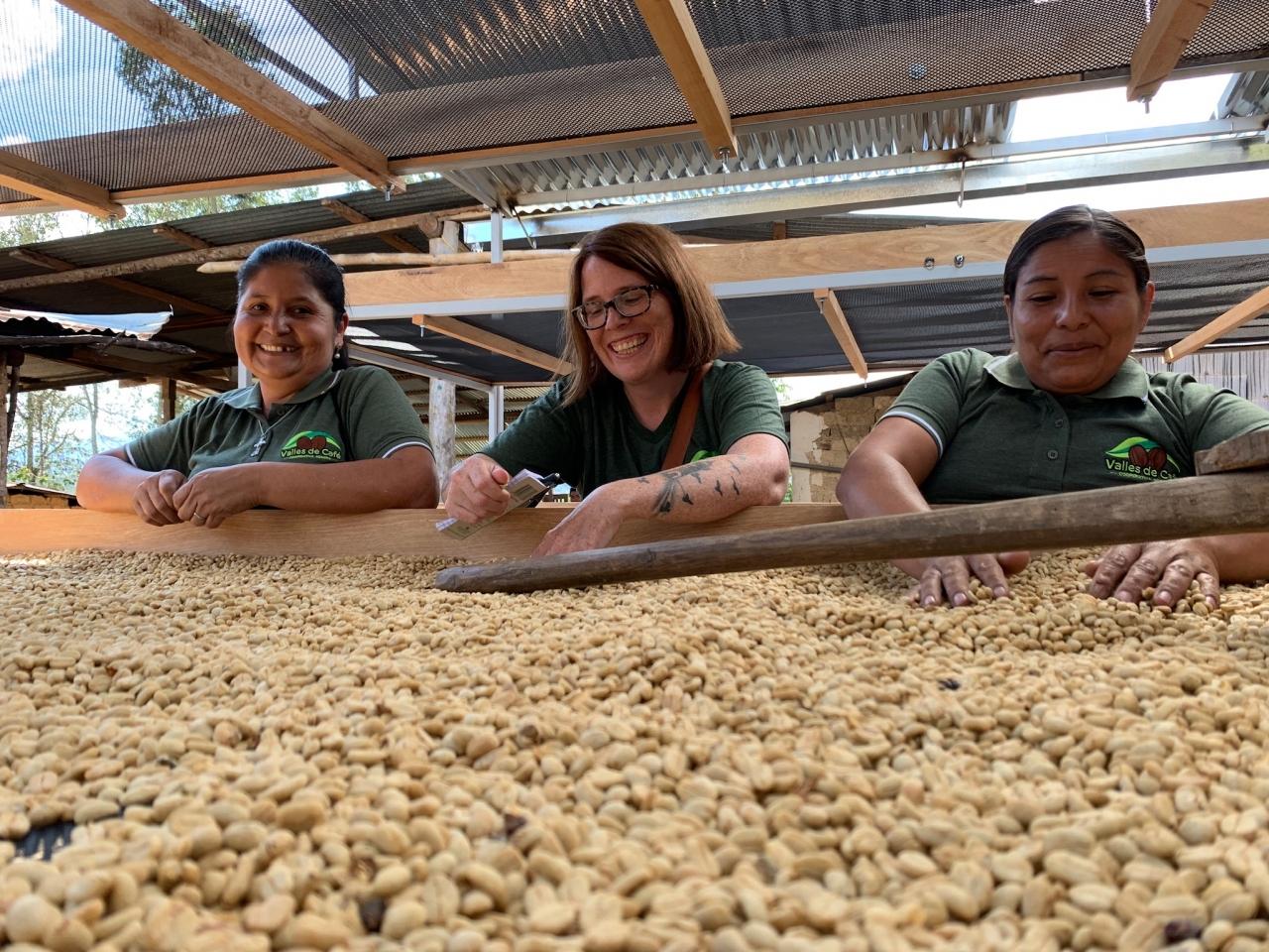Three people sort coffee beans