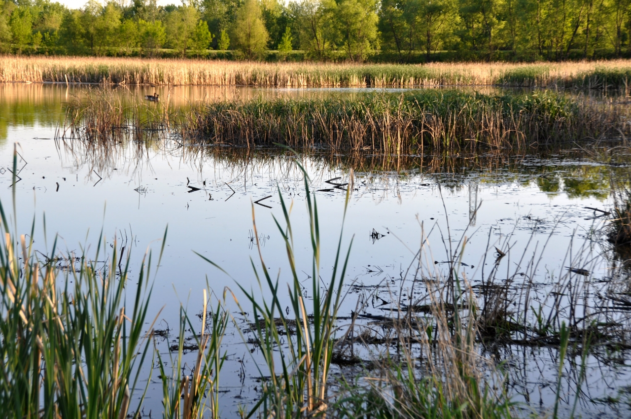 TNC estimate that wide-spread implementation of restored and constructed wetlands could sequester 7.4 million tons of soil organic carbon adjacent to working lands over a 10-year period. SWCS/IDALS Photo by Lynn Betts