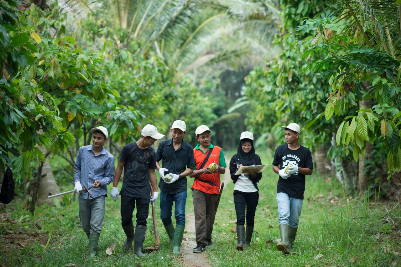 6 cocoa workers walking through the forest