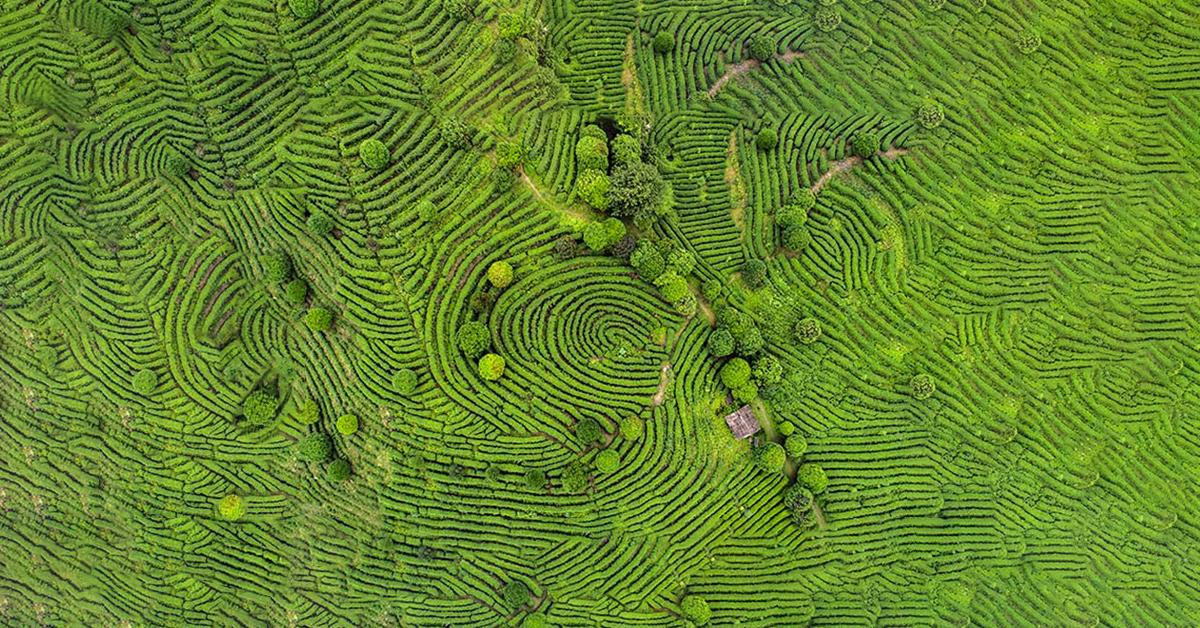 Birds eye view of fields looking like finger prints