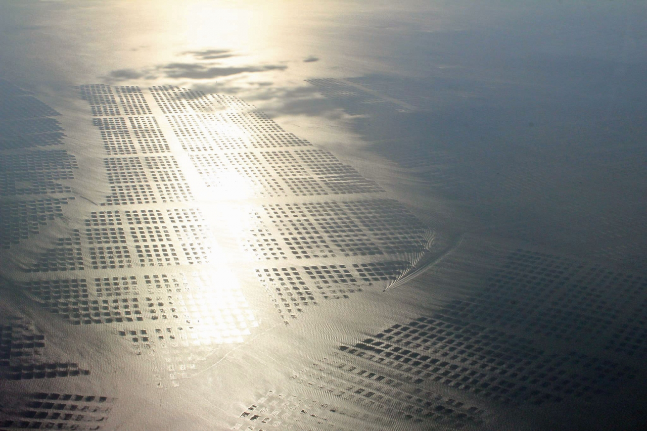 Aerial photo of a nori seaweed farm in Japan that is participating in the Oceans 2050 Seaweed Carbon Farming Project