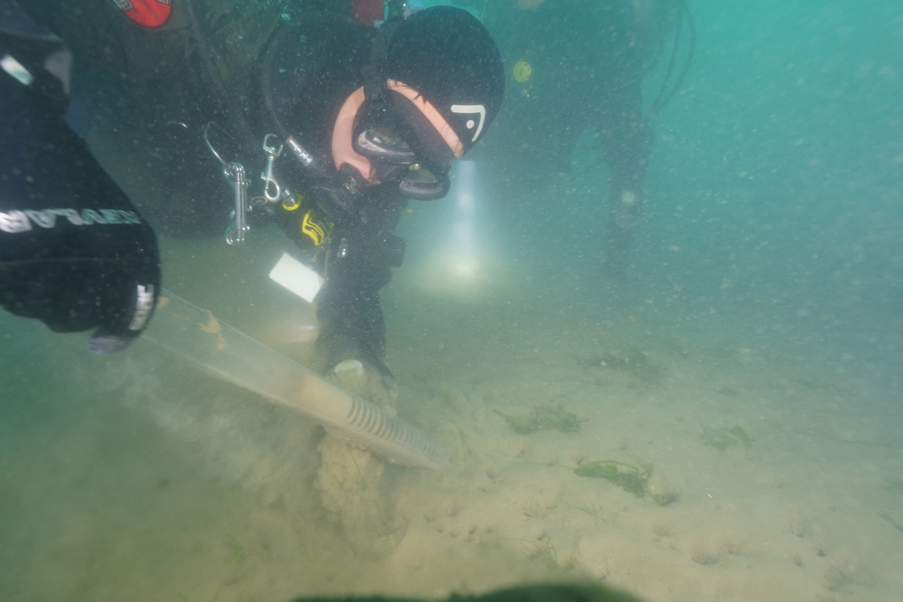 Divers collect sediment samples from an Oceans 2050 Seaweed Carbon Farming Project farm in South Korea