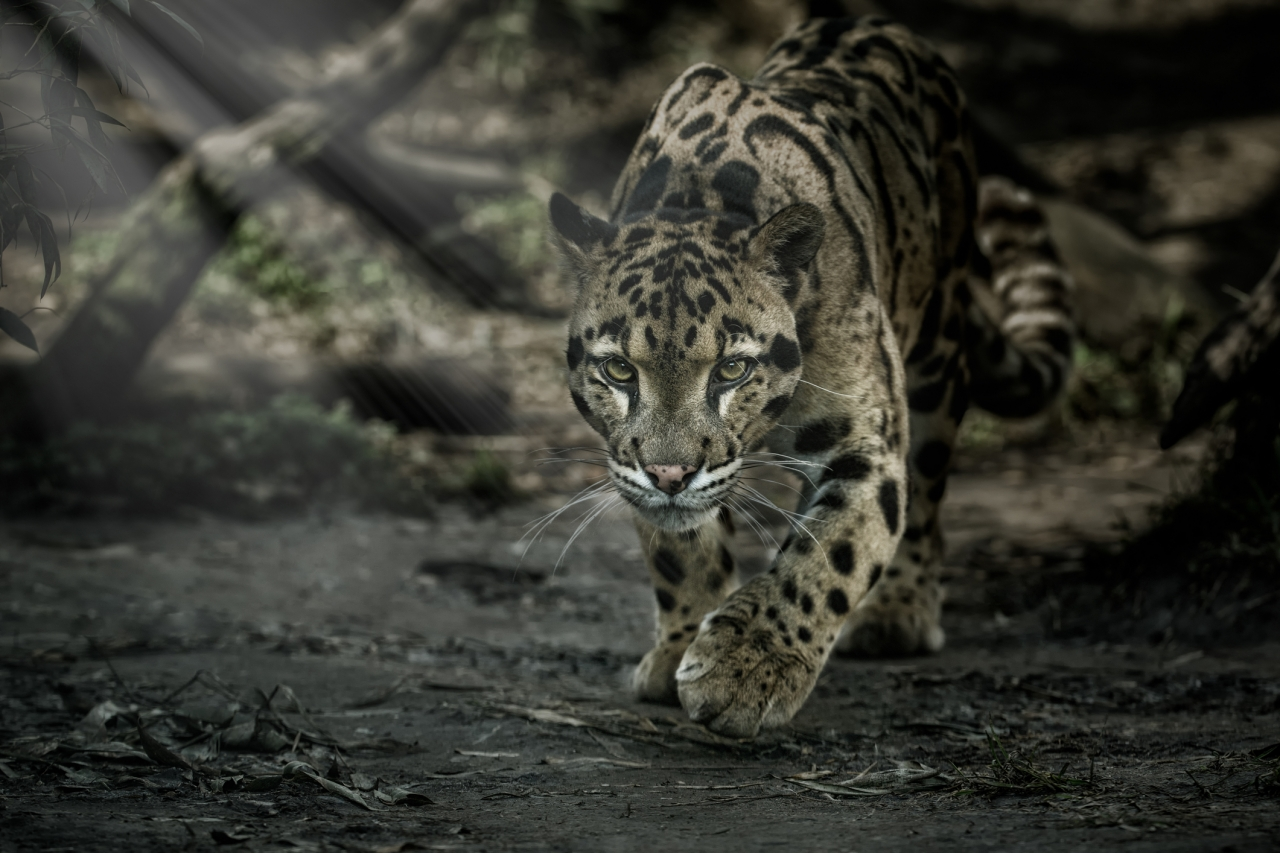 image of a leopard