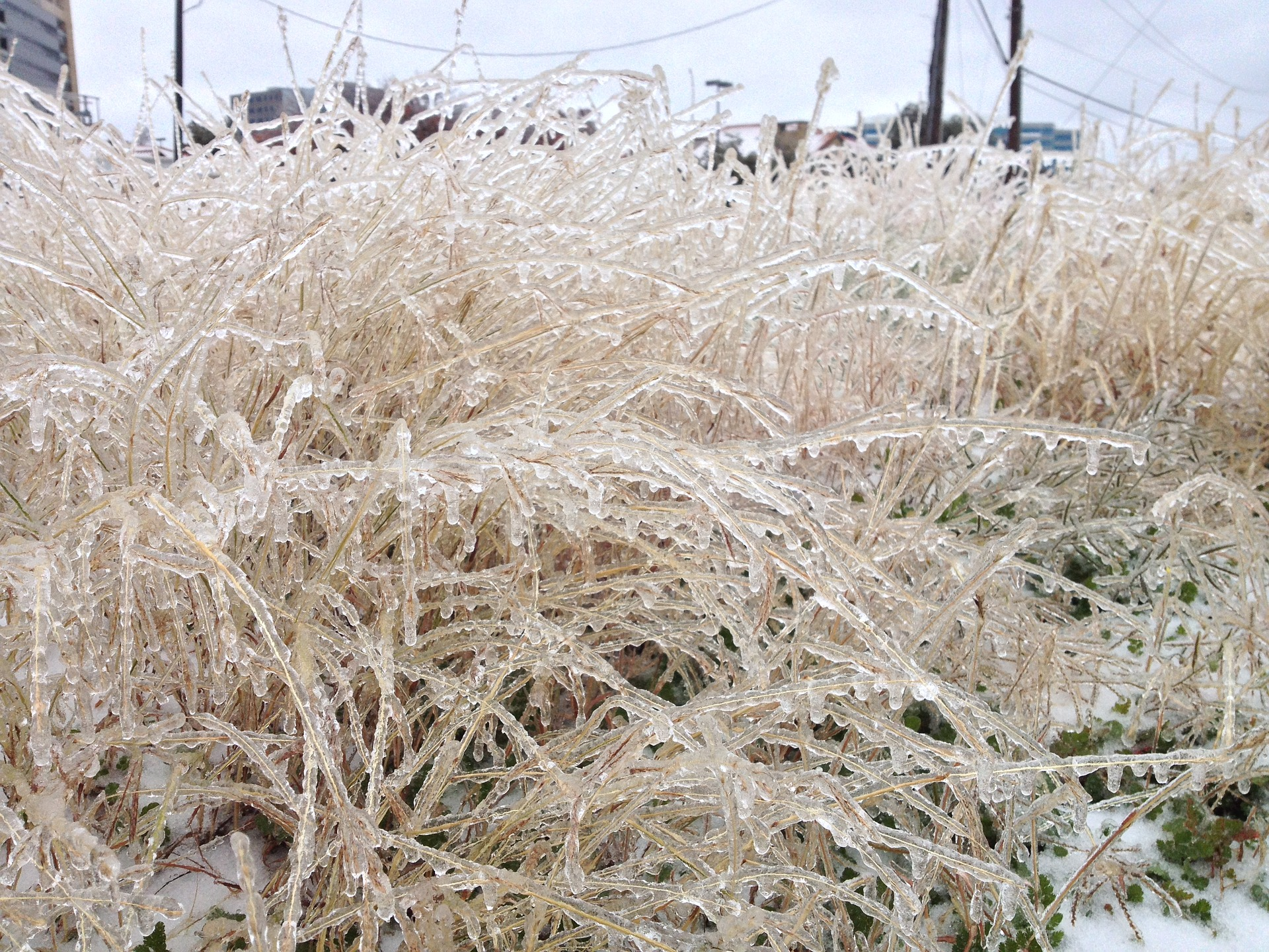 Frozen grasses after the February Texas ice storm. Image credit: M. Zane McClellan/Pixabay