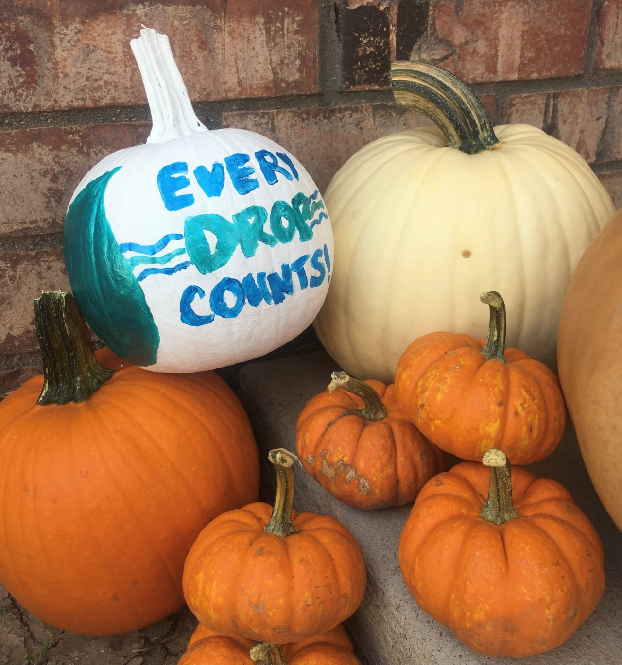 """Image of pumpkins. One pumpkin is pained to read, """"every drop counts"""""""