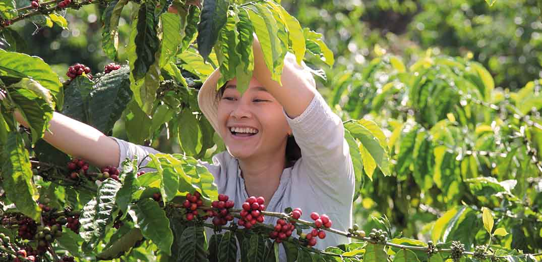 smiling young woman picks coffee beans