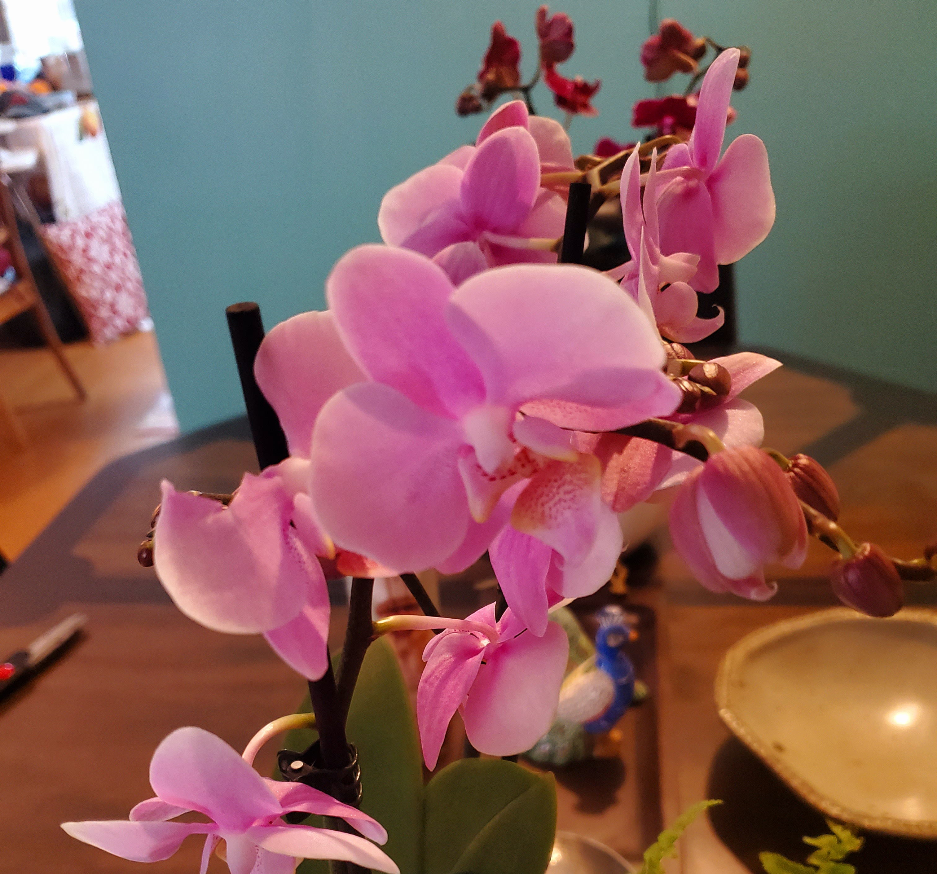 Who wouldn't smile at the thought of orchids arriving at their door for Mother's Day? (Image credit: Leon Kaye)