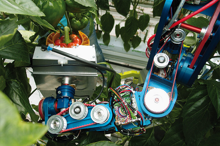robot amongst leaves