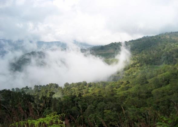 The rainforest with misty clouds overhead