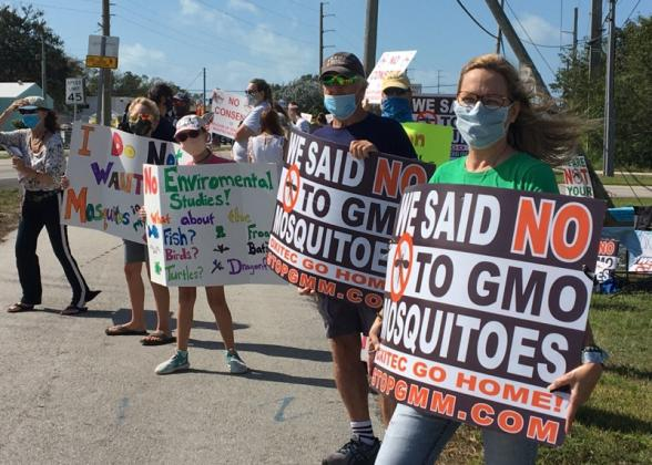 People Protesting Against GMO Mosquitoes