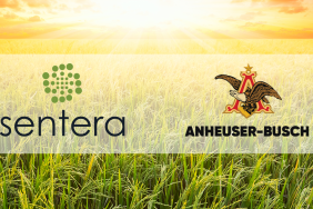 Sentera and Anheuser-Busch Partner to Help Rice Growers Enhance Their Fertilizer Programs and Sustainability Efforts With Predictive Modeling Image