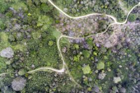 Sustainability Standards Embrace GIS Technology  Image