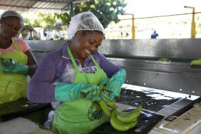 Fairtrade Commits to a Better Future for Thousands of Banana Farmers  Image