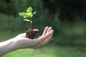 Teva Sets Ambitious Long-Term Environmental Goals As Part of Renewed ESG Strategy Image