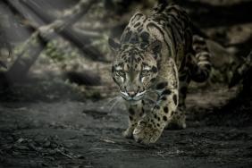 ZLI and Wild Welfare Partner for Animal Welfare Image