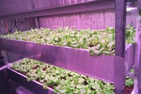 Awty Unveils Carbon-Neutral Container Farm Thanks to Sustainability Grant From Green Mountain Energy Sun Club Image