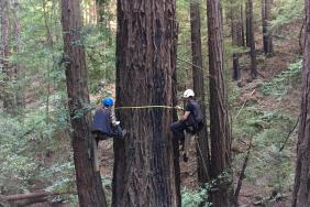Research From Save the Redwoods League and Humboldt State University Confirms Significant Role of Redwood Forests in California's Climate Fight Image