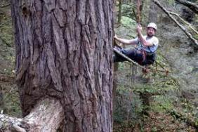Can One Man Save the Vanishing Hemlock? Image.