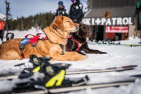 Subaru Winterfest Brings Music, Food and Adventure to Nine Ski Resorts in 2020 Image