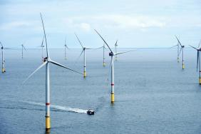 Ørsted Announces Offshore Wind Biodiversity Policy Image