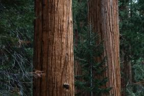 Restoring California Forests - Arhaus + American Forests Image