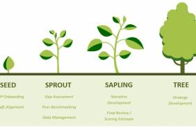 Seeing the Forest for the Trees: The Four Growth Stages of a Successful CDP Reporting Season Image