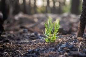 In Times of Uncertainty, Plant a Tree Image