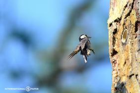 Supporting the Longleaf Pine Ecosystem in the Southeastern U.S. Image